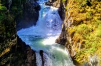 Waterfalls, Coombs, and Cathedral Grove Rain Forest