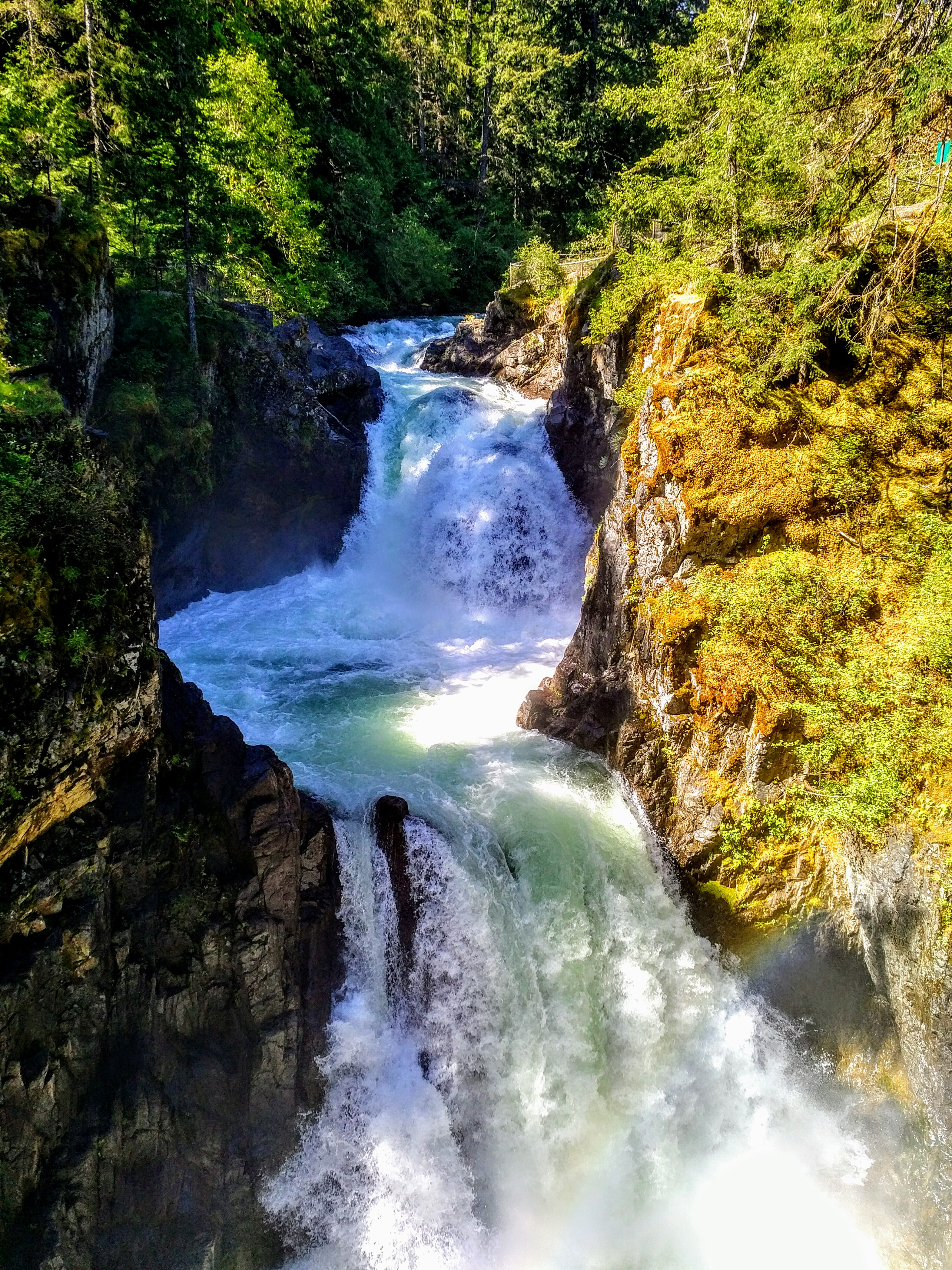 Waterfalls Coombs And Cathedral Grove Rain Forest